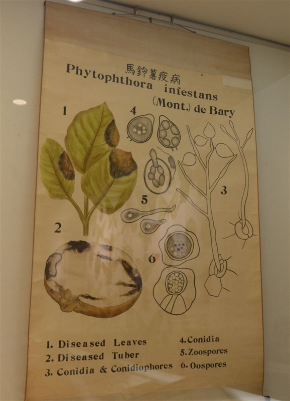 かつて視聴覚教材として活用されていた植物病理に関する「教育掛図」