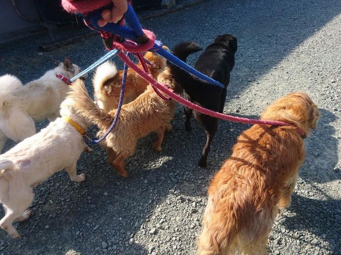 コロナ 犬 の 散歩