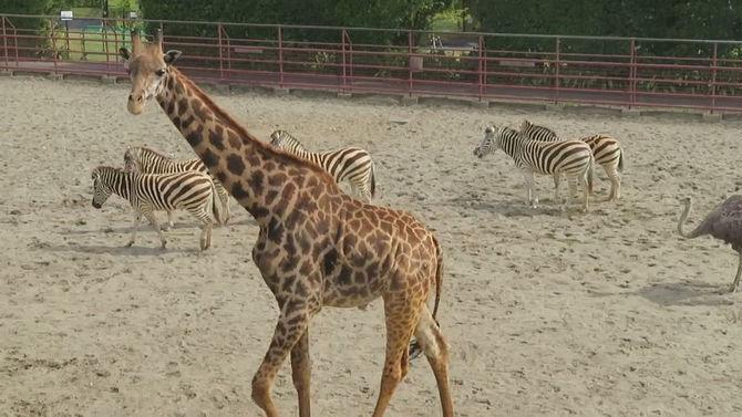 動物園 フェニックス 自然